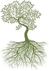 Hakomi-Tree-Image
