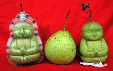 These are pears, shaped while growing by a mold.